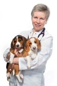 Ask for tips on best puppy food from your veterinarian
