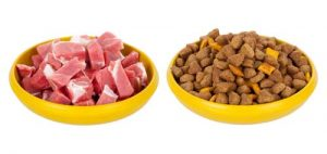 Dry or wet puppy food