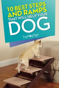 Best Dog Steps for Bed or Arthritis