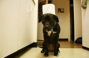 Process of Dog Toilet Training