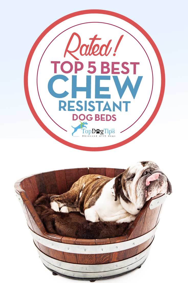 Top 5 Best Chew Resistant Dog Beds 2016 Review Top Dog Tips