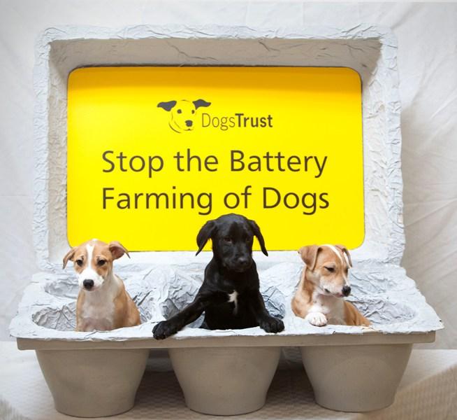 dogs trust uk