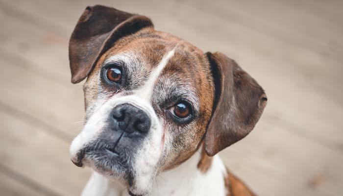 Before You Adopt an Older Preloved Dog