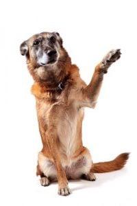 Hidden Talents of Preloved Dogs