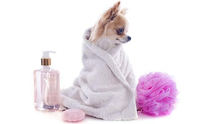 Flea Shampoo for Dogs – Top Dog