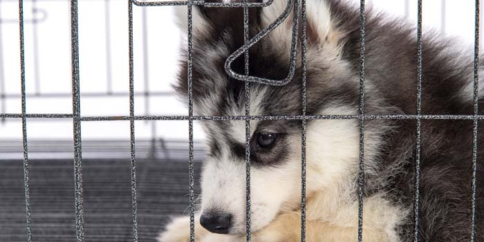 How to Stop Dog From Pooping in House and in Dog Crate