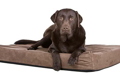Top 6 Best Indestructible Dog Bed Brands 2018 Review Update
