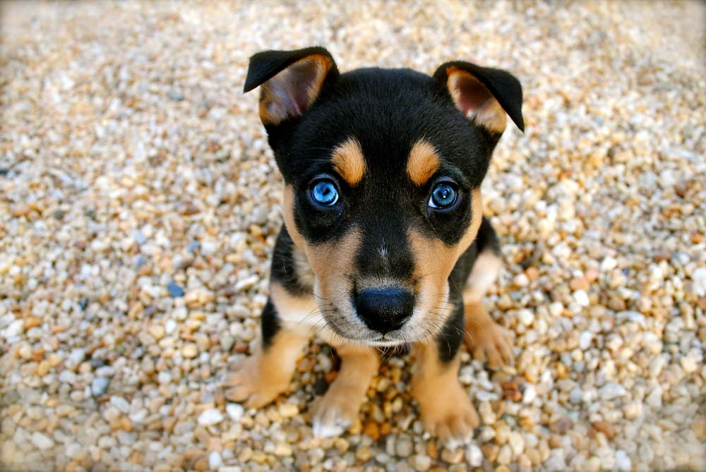 Top 10 Cute Dog Breeds You Can T Resist Top Dog Tips