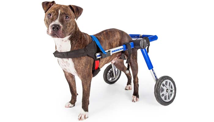 Top 5 Best Dog Wheelchair for Dogs Rehabilitation