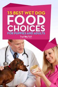 Meilleure nourriture humide pour chiens pour chiots et chiens adultes