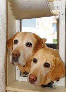 The Best Dog Door for Pets