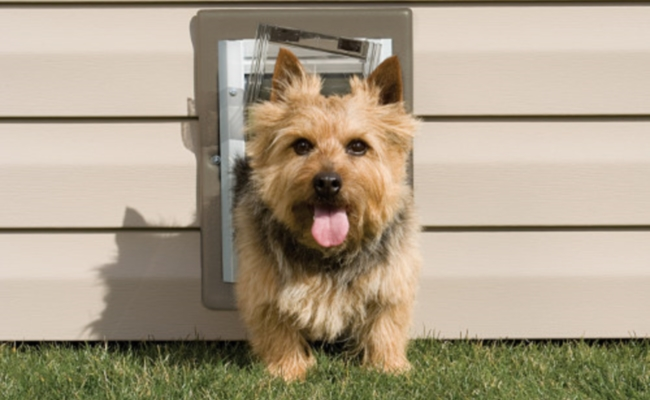 Top 10 Best Dog Doors Of 2018 For Walls Screens And Doors
