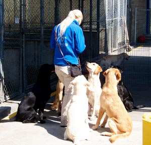 Dog Trainer Certification: A Guide for Newbies - Coach Trainer