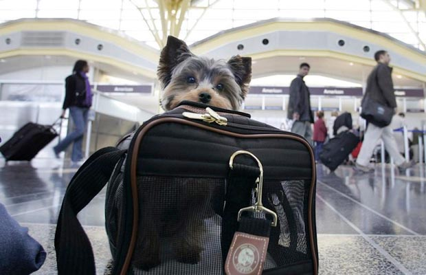 Dog travel 101 how to ship a dog by plane top dog tips for Traveling on a plane with a dog
