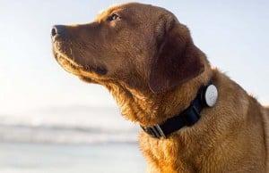 Best Dog GPS Collar
