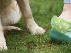 Best Dog Poop Scooper