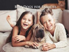 Best Dogs for Families with Kids