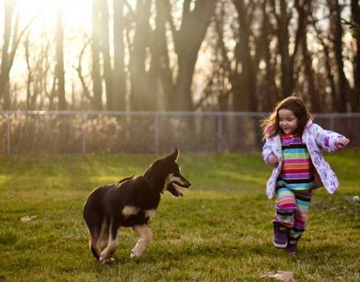Best Medium and Best Small Dogs for Kids