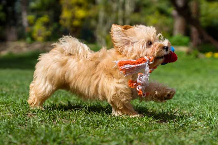 Pics Of Cute Small Breed Dogs