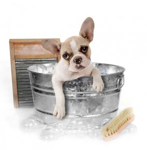 Dog Care 101: How to Groom Your Dog at Home 11