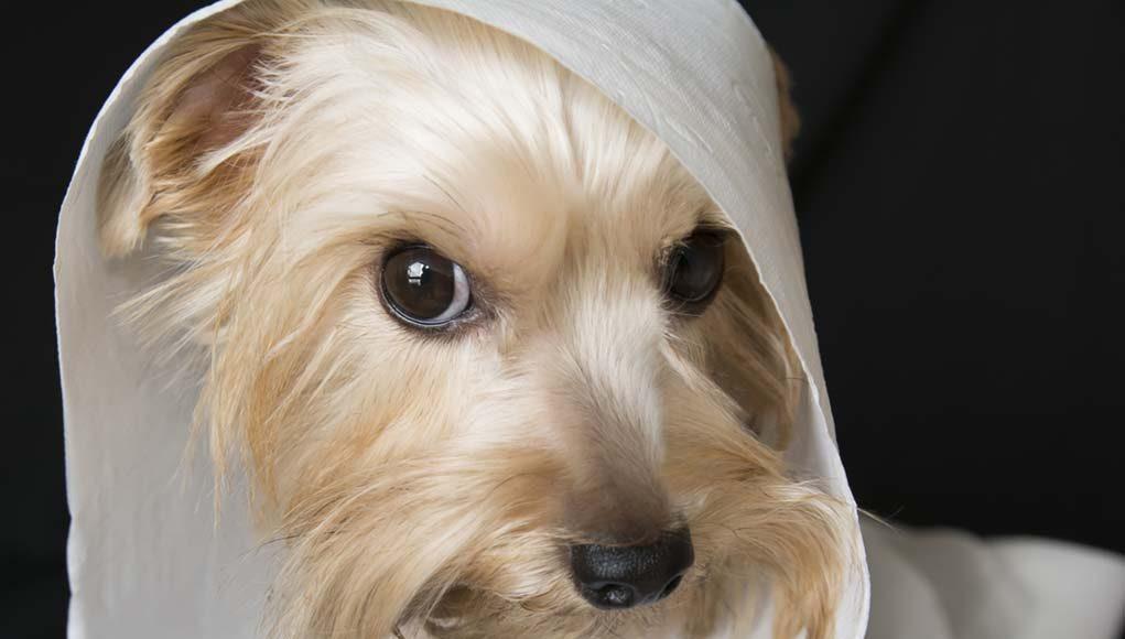 Tips on Toilet Training Puppies