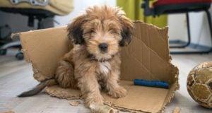 25 Most Common Dog Behavior Problems