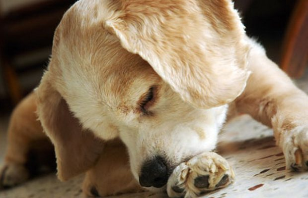 A New Weapon in the War Against Pet Allergies is Here