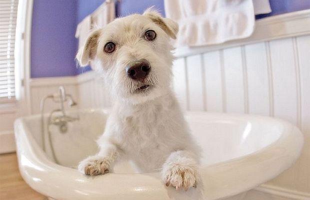 Groomer Brings Posh Treatments to Pets in North Carolina