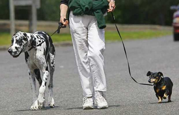 New App Pairs Dog Walkers with Dogs
