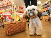 Pet Valu Doing $4 Million Overhaul to Jack's Pets Locations