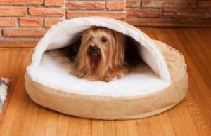 Small Startup Transforms Into Multi-Million-Dollar Pet Buisness
