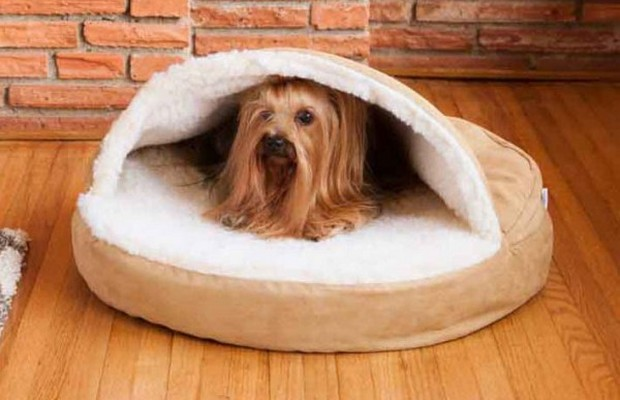 Small Startup Transforms Into Multi-Million-Dollar Pet Buisness