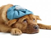 Best Dog Illness Symptom Checker Online
