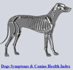 Best Dog Illness Symptom Checker for Pets