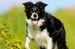 Eukanuba Launching New Campaign That Focuses on Canine Longevity
