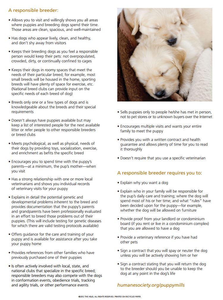 Where to Buy a Dog: Responsible Adoption – Top Dog Tips