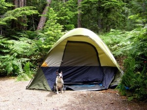 How to Prepare Your Dog for Camping
