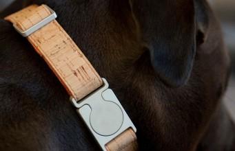 MEMAPets Introduces ALU Smart Collar for Dogs