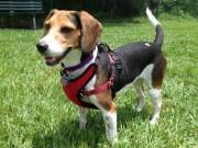 Kumfy Tailz Re-Defines Pet Comfort With Gel Pack Technology