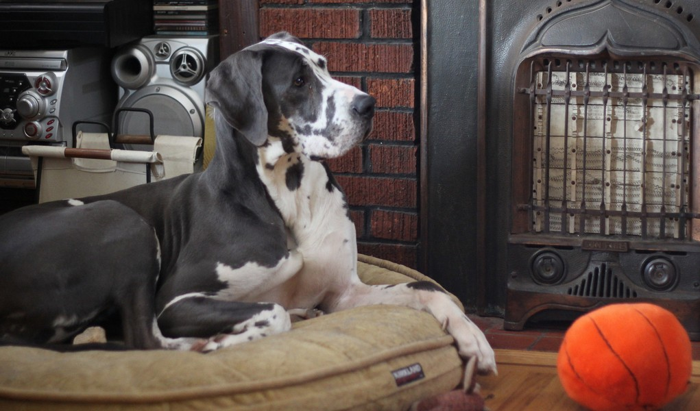 Bedtime Basics Why Your Fido Needs A Dog Bed Top Dog Tips
