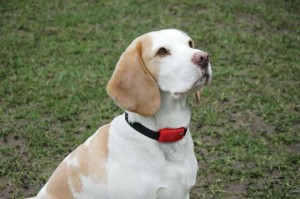 Best Alternatives to Dog Shock Collars