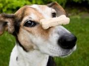 Colorado Company Recalls Dog Treats