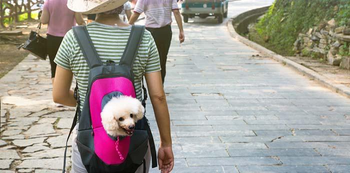 Dog Carrier Backpack vs Dog Carrier Sling