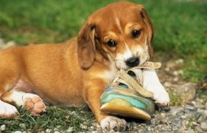 Fidobiotics Help Your Dog's Digestive System Function Properly