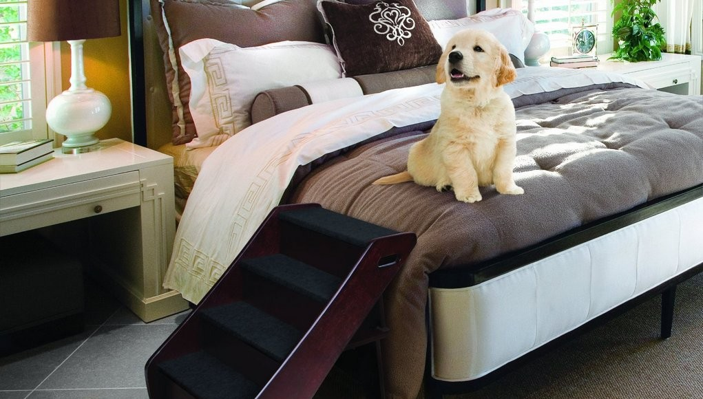 Dog Ramps Or Dog Stairs How To Decide Top Dog Tips