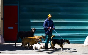 How to Write a Dog Walking Business Plan