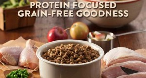 Ten Best Grain Free Dog Food Brands