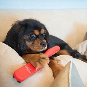 The Shedding Saga - Getting Dog Hair OFF Furniture