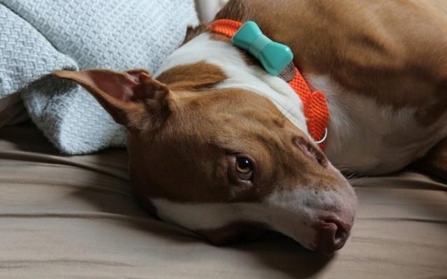 WonderWoof Brings Fashion to Dog Technology