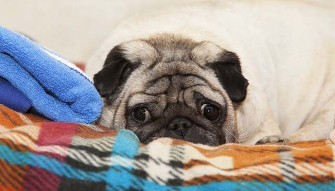 How to Know If Your Dog Is Upset